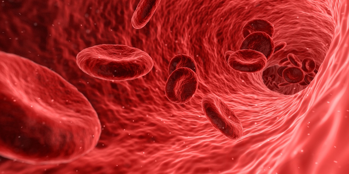 immune system healthy blood cells - breathing techniques for health immunity