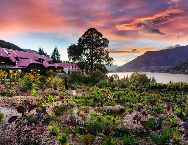 wise and well queenstown event