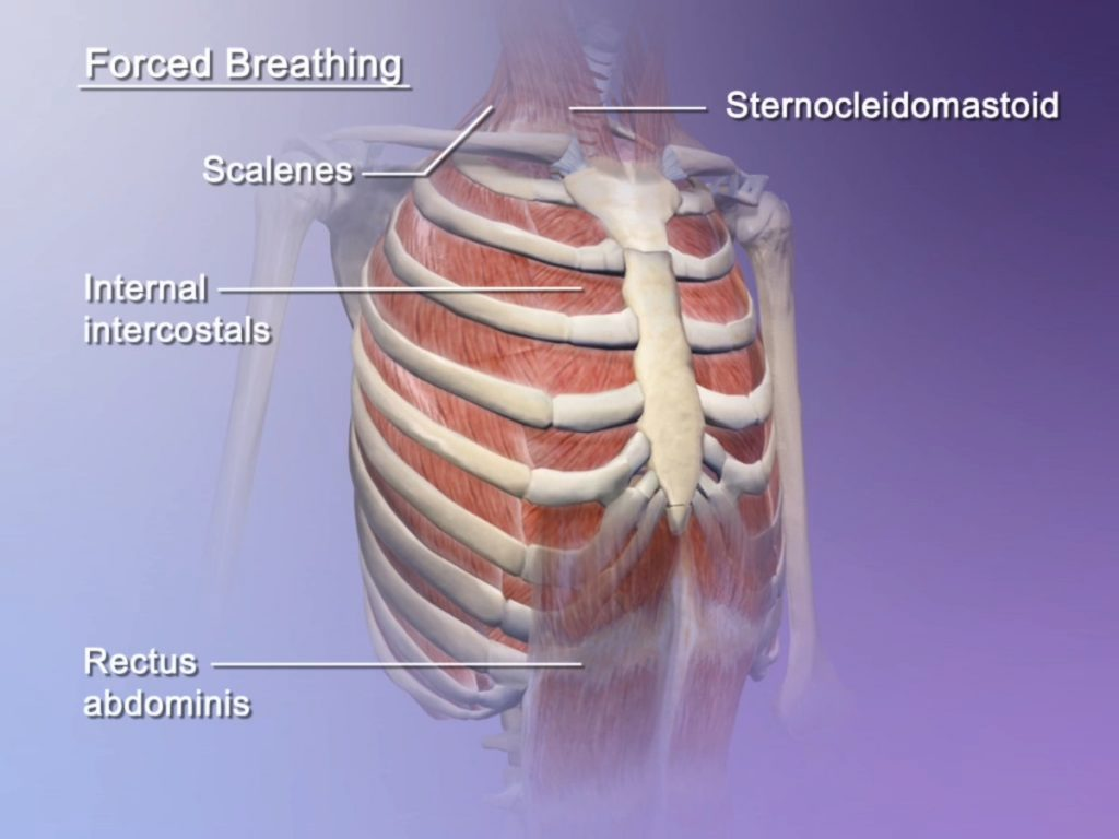 Breathing Mechanics